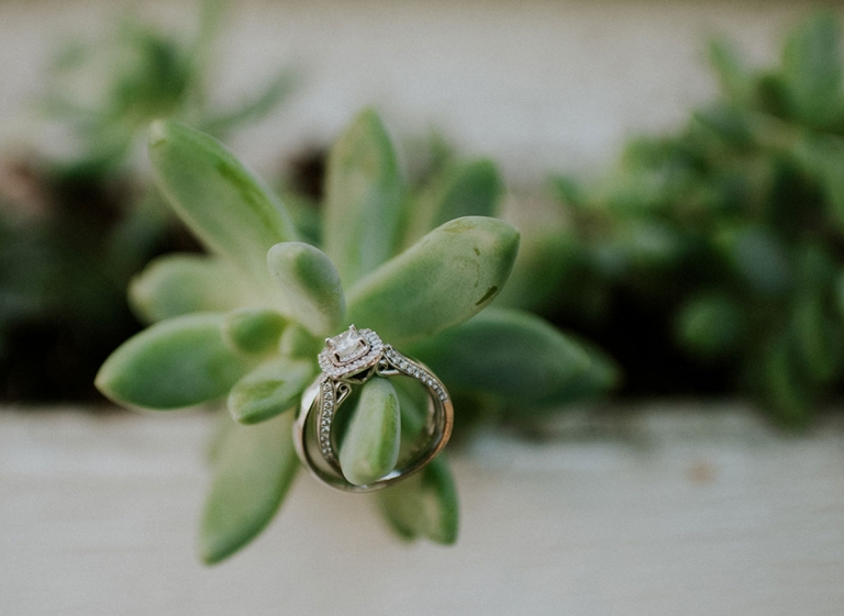 Lume Photography- wedding rings and succulent