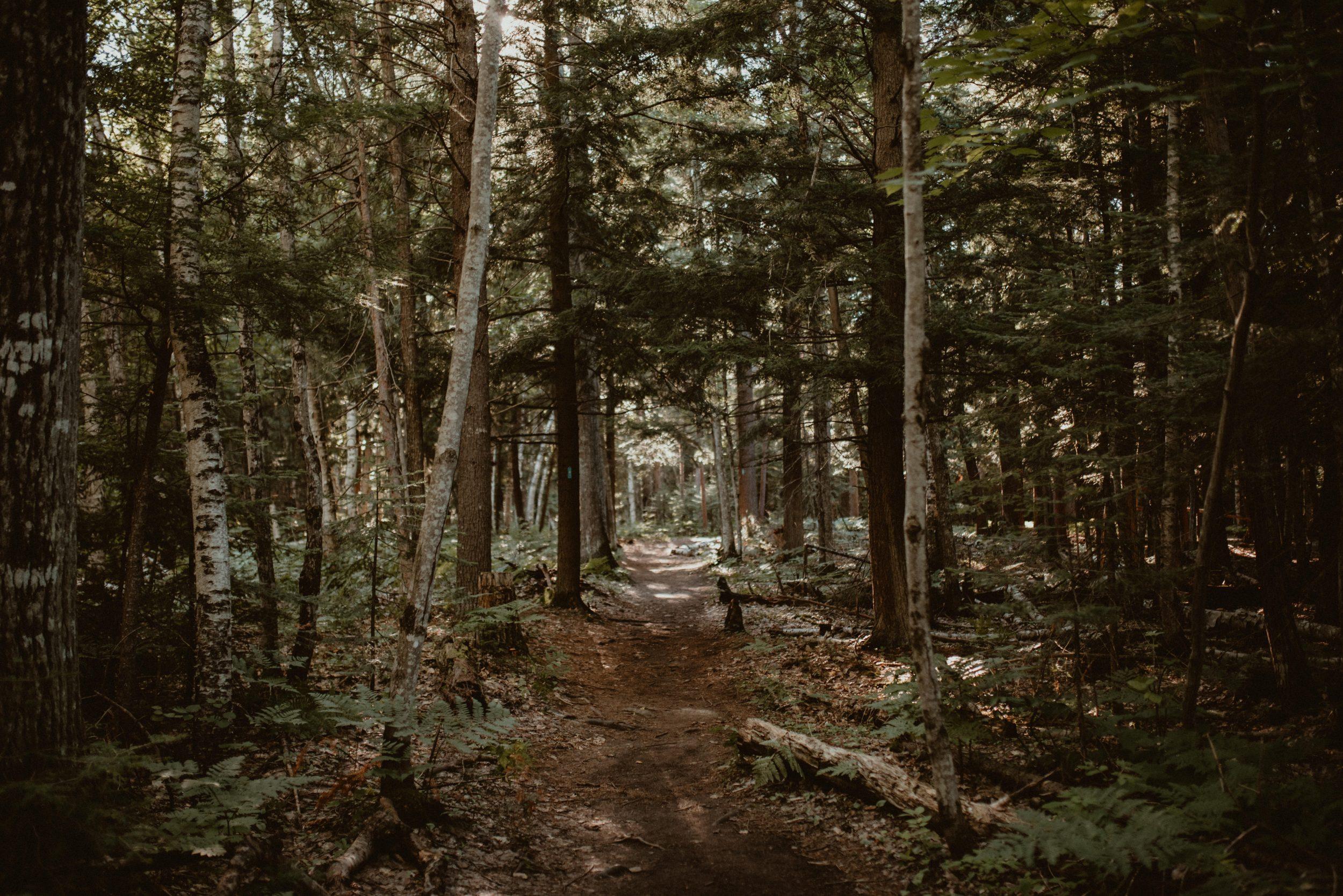 Forest trail near Marquette, Michigan