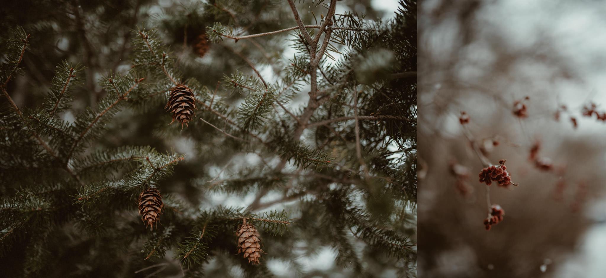 Marquette in Winter